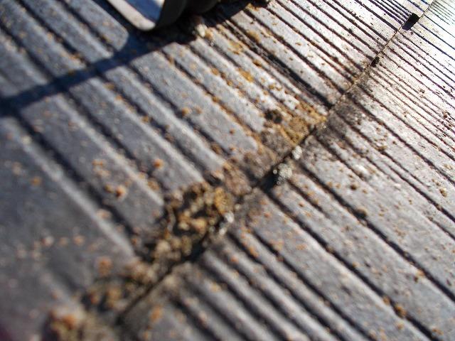 苔や藻が生えている屋根